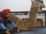 Adeel Akthar and his camel
